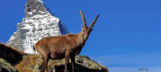 Bring out your inner Capricorn hiking in Switzerland.